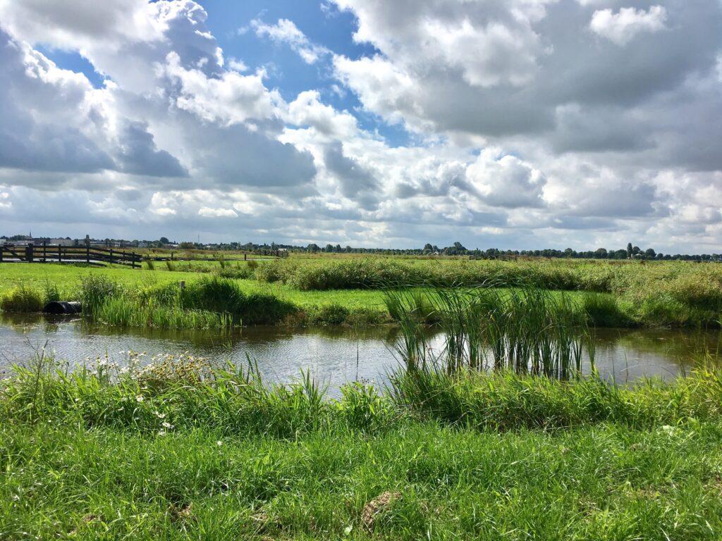 Groen landschap met water