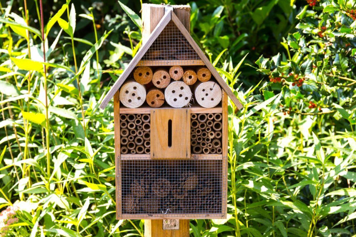 Challenge: wie maakt het mooiste bijenhotel?